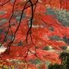 御苑の紅葉 -1