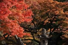 晩秋の御苑