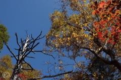 頭上の秋色