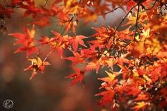 御苑の紅葉 -13