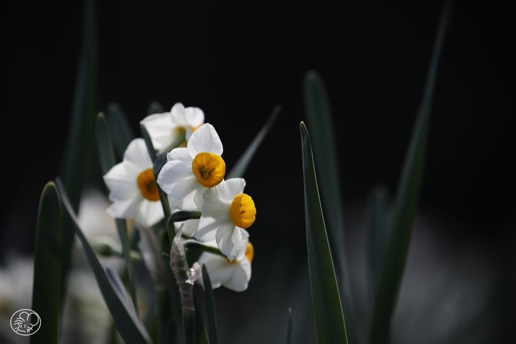 いつもの光がいつもの春を教える