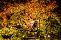 Autumn colors light up ①