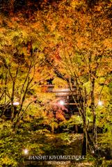 Autumn colors light up ②