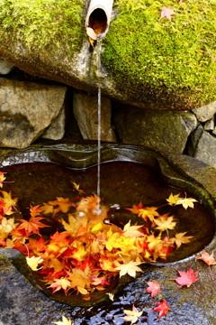 水盤の中の秋