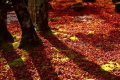 Shadow on fallen leaves