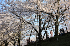 インクライン桜を楽しむ人々