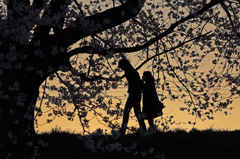 櫻の下の物語