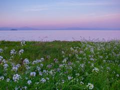 琵琶湖情景