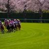 桜咲く最終コーナー