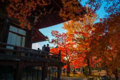京都 真如堂の秋