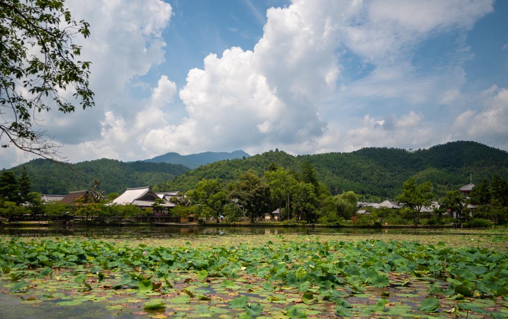 大覚寺の夏