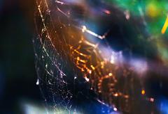 toile d'araignée Ⅰ