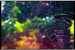 toile d'araignée Ⅱ