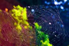 toile d'araignée Ⅲ