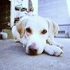dog-A