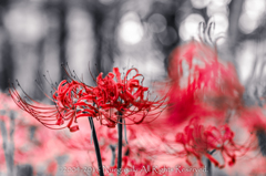 Ominous bloom