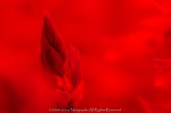 (Scarlet + Sage) / 2  = Salvia