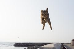 ジャンプ〜っ!