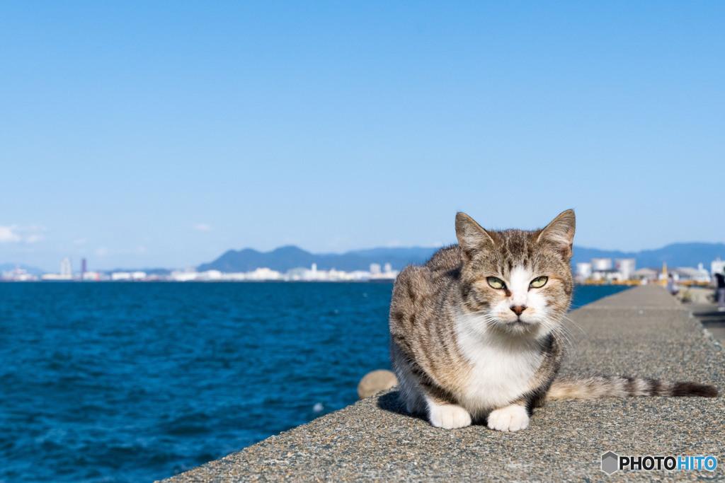 防波堤のネコさん