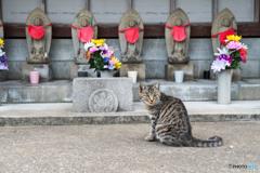 お寺のネコさん