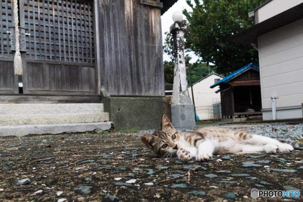 神社で出会ったネコさん(1)