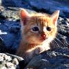 小さい子猫さん