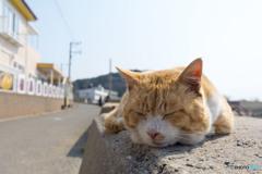 ねむねむネコさん