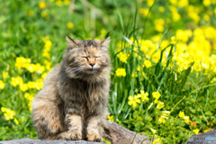お花畑のしーちゃん。くしゃみが出そう。