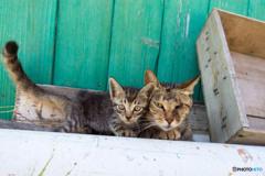 隻眼のネコさん、メルちゃんとお子ちゃま(1)