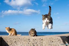 飛行隊のネコさん(3)