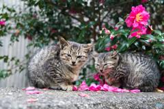 山茶花とネコさん(5)