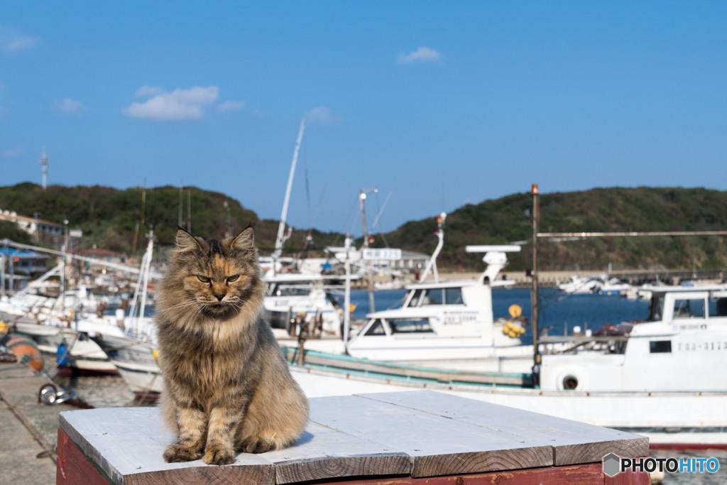 漁港のネコさん