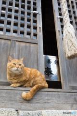 コムギさんと神社で出会う