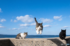 飛行隊のネコさん(5)