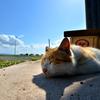 午睡を楽しむネコさん