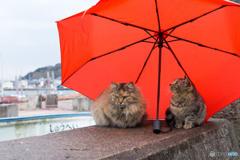 小雨だニャ