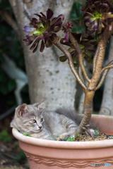 植木鉢の中。居心地いいニャ。