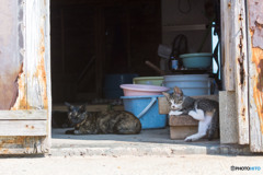 漁村の倉庫で(4)