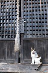 神社のネコさん(2)