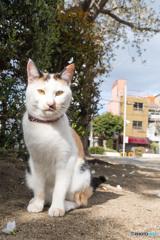 公園のネコさん