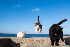 飛行隊のネコさん(2)