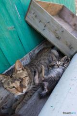 隻眼のネコさん、メルちゃんとお子ちゃま(2)