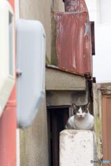 大阪のネコさん