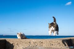 飛行隊のネコさん(1)