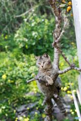 木登り小太郎、きりっとね