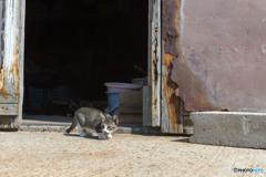 漁村の倉庫で(3)