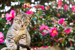 山茶花とネコさん