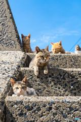 海岸にあるネコさん階段