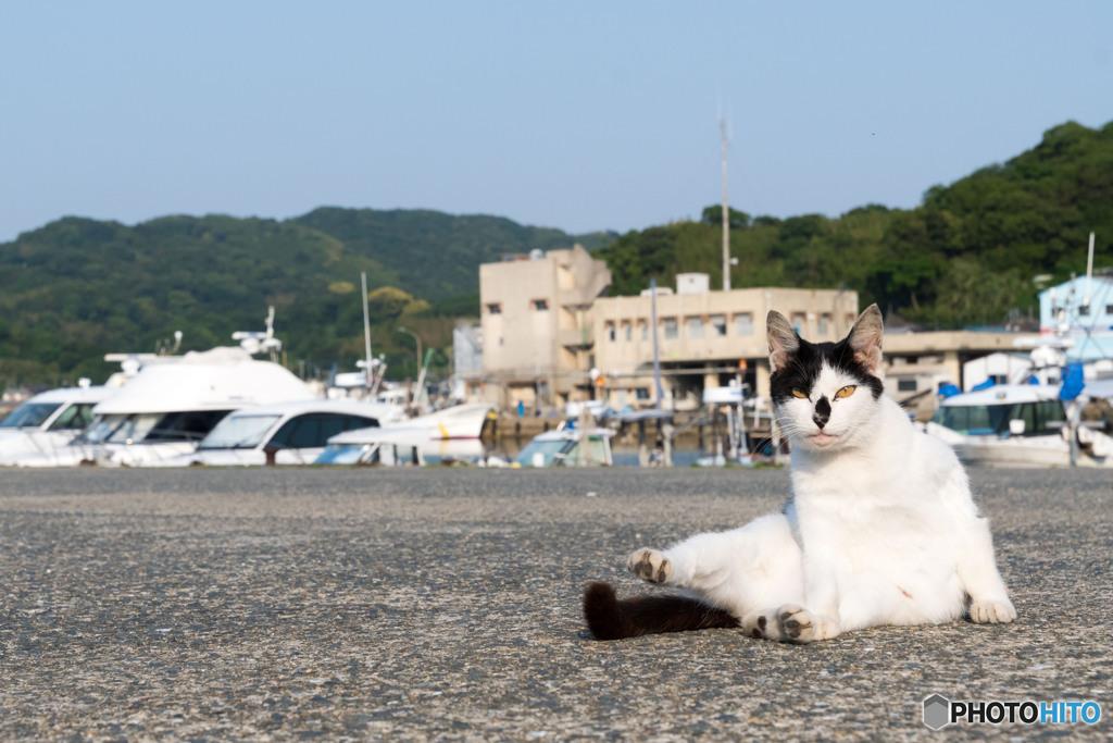 フィッシャリーナのネコさん