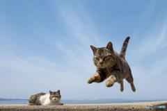 飛行隊所属のネコさん